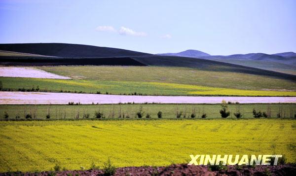 Pemandangan ladang gandum ini indah sekali bagaikan sebuah lukisan